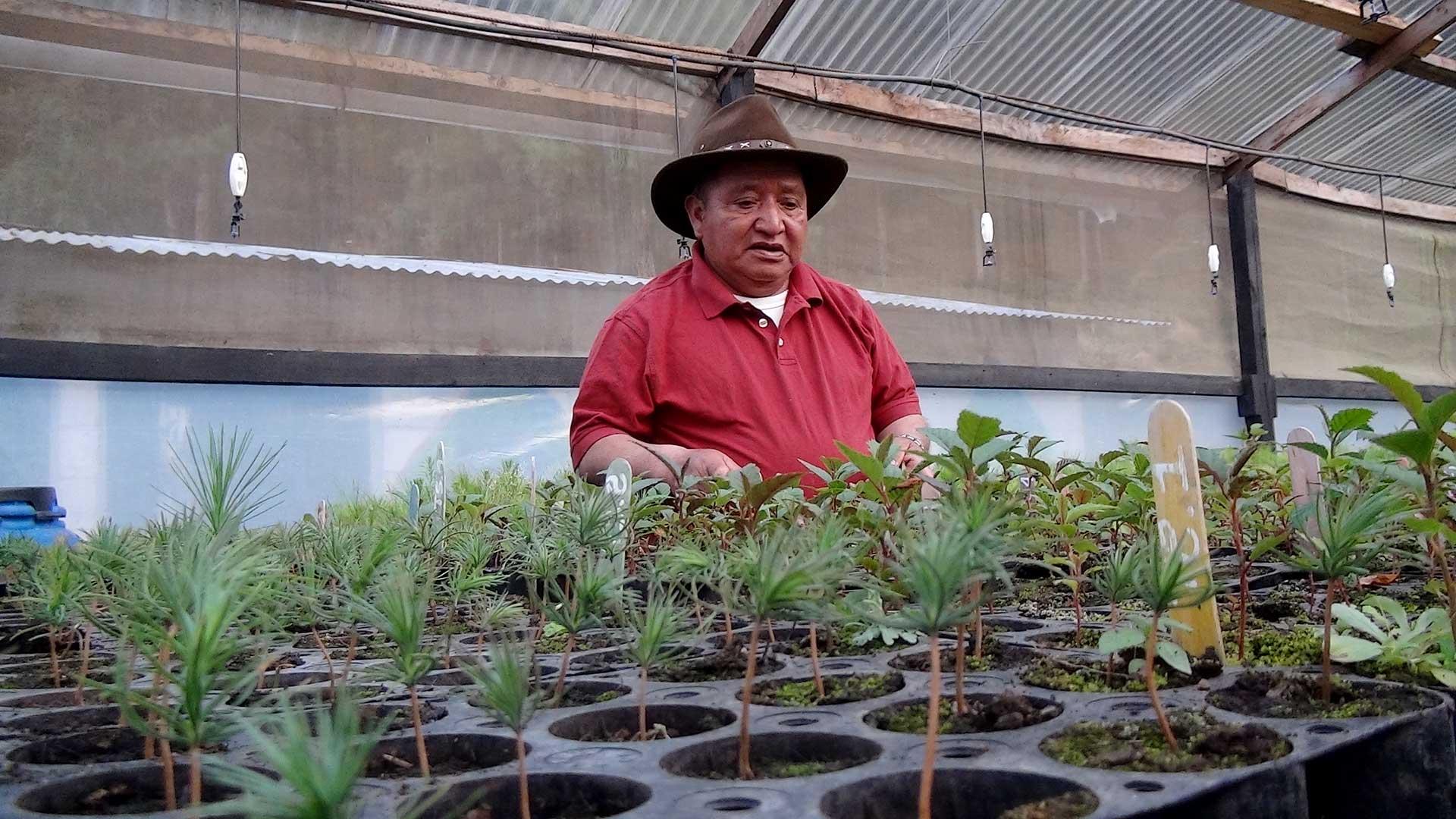 Foto de indígena frente a cultivos de árboles